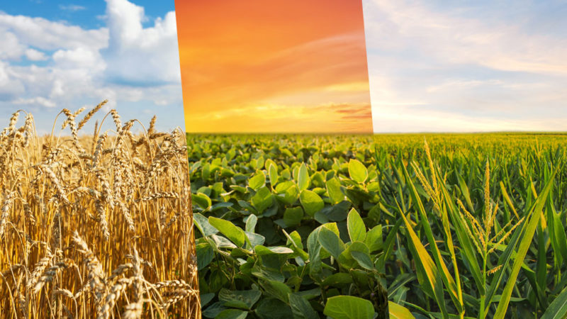 previsao-climatica-aponta-para-boas-produtividades-dos-plantios-de-verao-no-rio-grande-do-sul