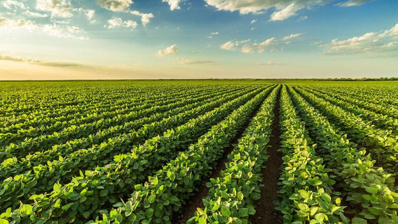 Aplicação zero faz toda a diferença no controle de doenças da soja