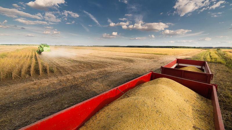 Em 2020, safra brasileira de grãos deve bater recorde histórico, segundo IBGE