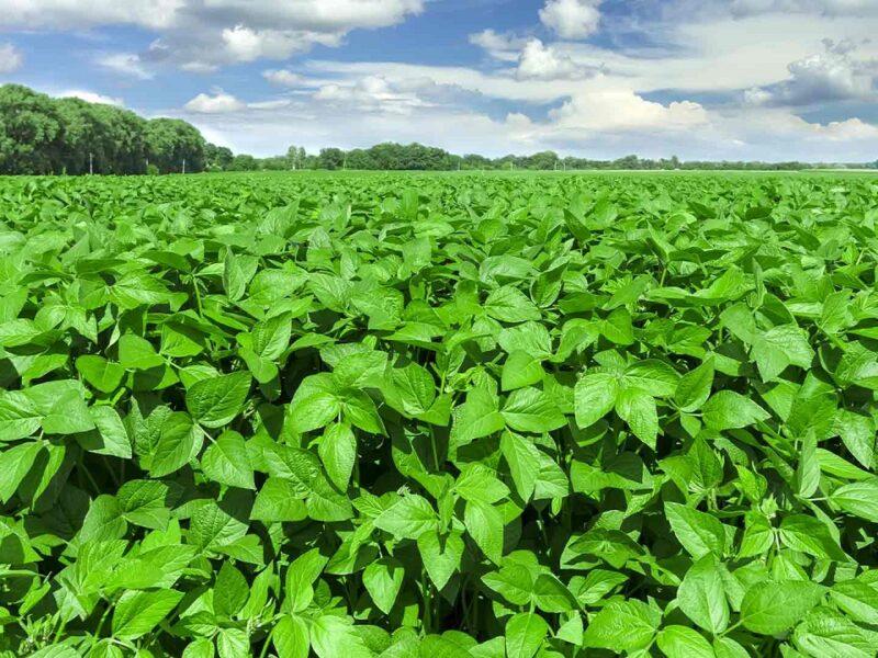 A importância dos fungicidas no controle de doenças