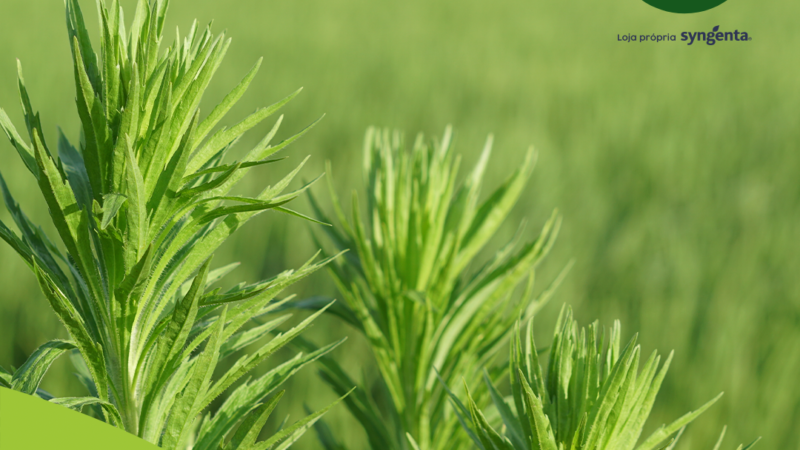 Plantas daninhas são um dos problemas mais conhecidos entre os agricultores e causam grandes prejuízos